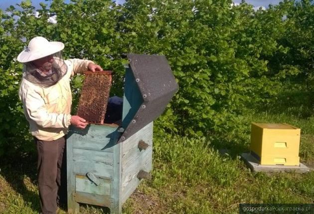 Nestlé kupiło ule podkarpackim sadownikom