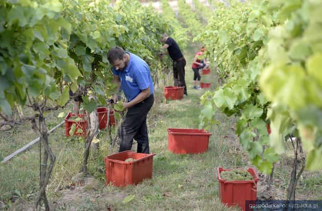 Przeworskie Winnice