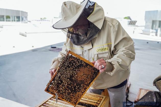 Rusza Sezon pszczelarski 2020 w Vivo! Krosno