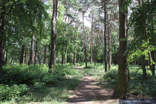 Za kolejny etap rewitalizacji Parku Leśnego Mielec zapłaci 490 tys. zł