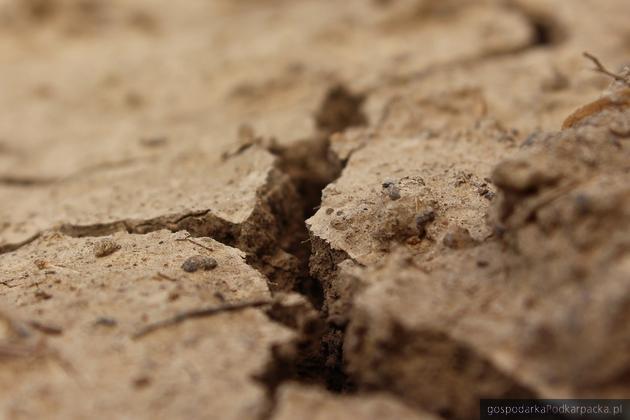 Czy po nawalnych deszczach Polsce w dalszym ciągu zagraża susza?