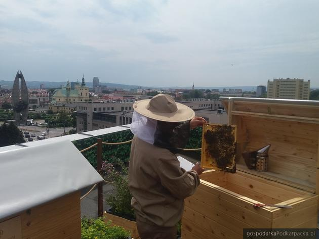 Na dachu Galerii Rzeszów powstała pasieka