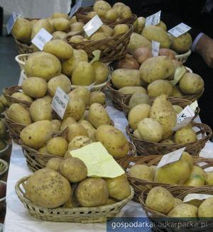 Ziemniaki z dębickiego Detaru. Fot. Adam Cyło