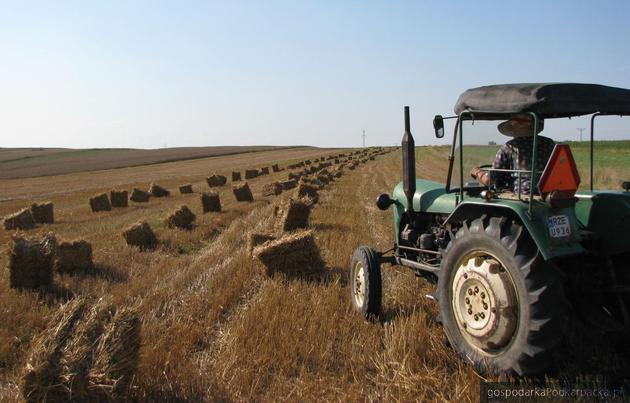 Prace sezonowe w rolnictwie słabo płatne